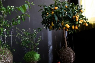 2011-string-gardens-500x4081