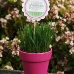 petit-pot-pelouse2
