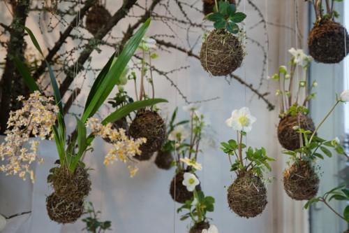 Les jardins suspendus de string gardens - Vaso in gres per orchidee ...
