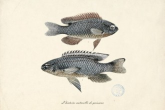 etsy-les-poissons3-500x4001