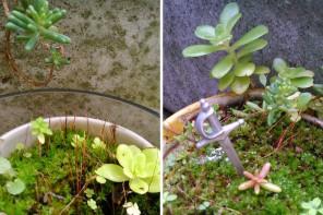 fairy gardens // plumetis