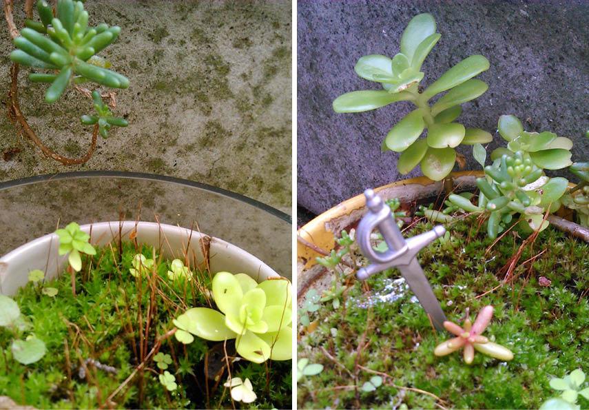 fairy gardens mousse plumetis