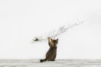 KittenFeather1