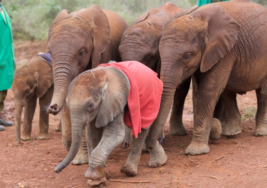 Love-Brand-Co._DSWT_Orphans-550x3881