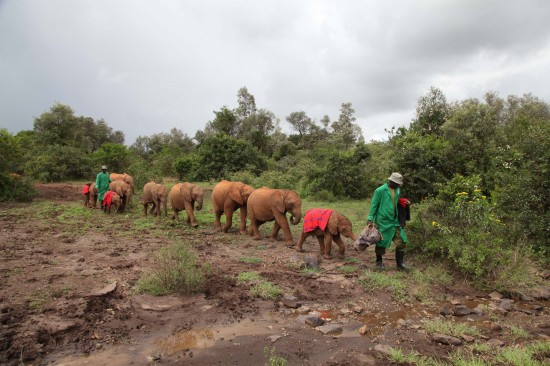 Love Brand & Co._DSWT_Orphans going for their milk feed