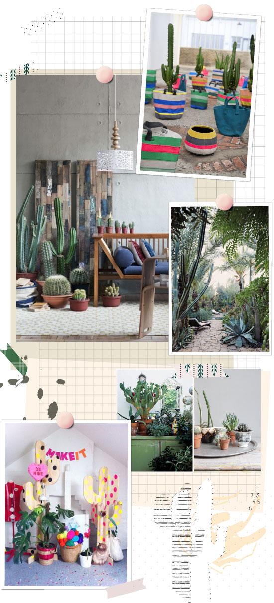 cactus-inspiration
