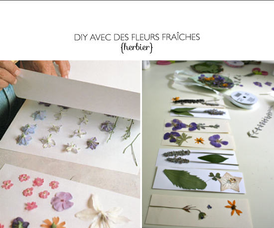 DIY pressing flower - herbier
