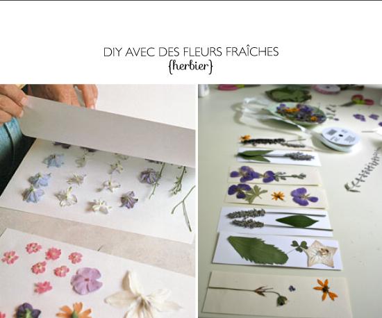 DIY pressing flower - herbier