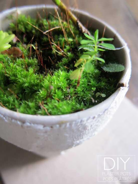 DIY Plaster Flower Plant