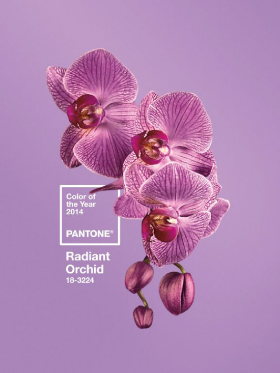 Pantone Color of the Year 2014Radiant Orchid