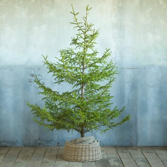Basket tree skirt // terrain