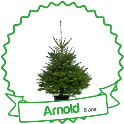 Sapin en pot Arnold Treezmas