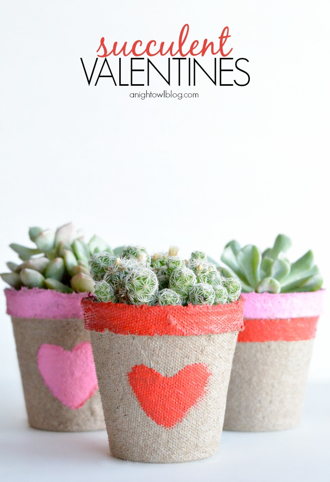 Succulent-Valentines // a night owl
