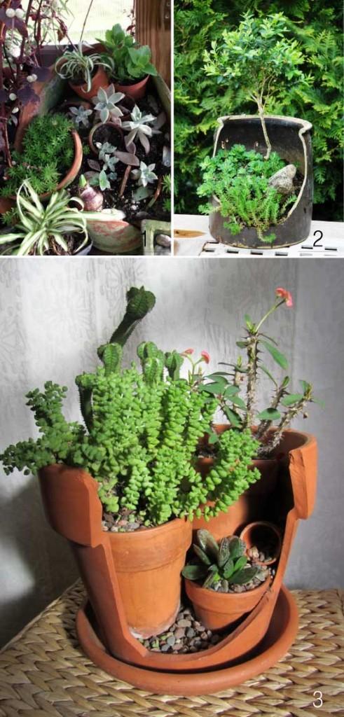 DIY-pots-succulents
