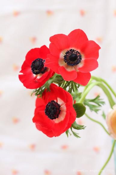 bouquet6-plumetis