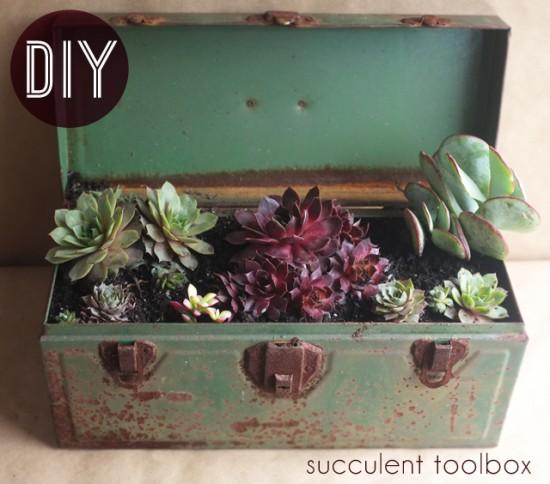 succulent tool box // Alana Jones Mann