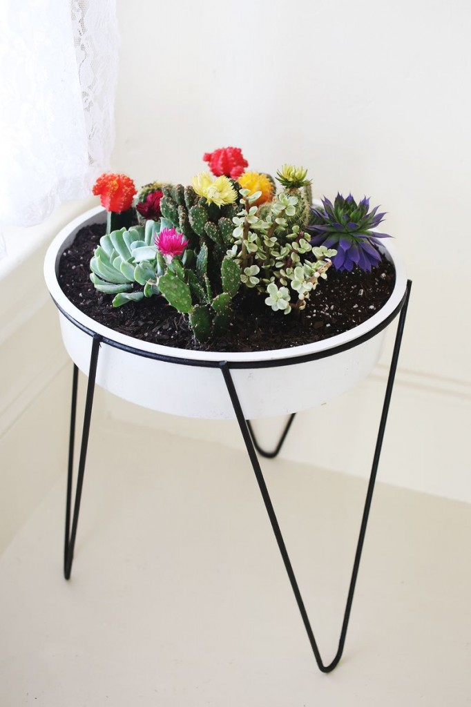 vintage planter cacti garden // A beautiful mess