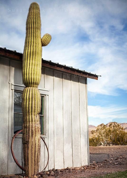 Desert Decor Trends // Susanprintshop