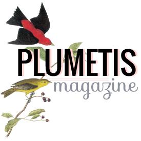 Plumetis Magazine - Le magazine des arts décoratifs