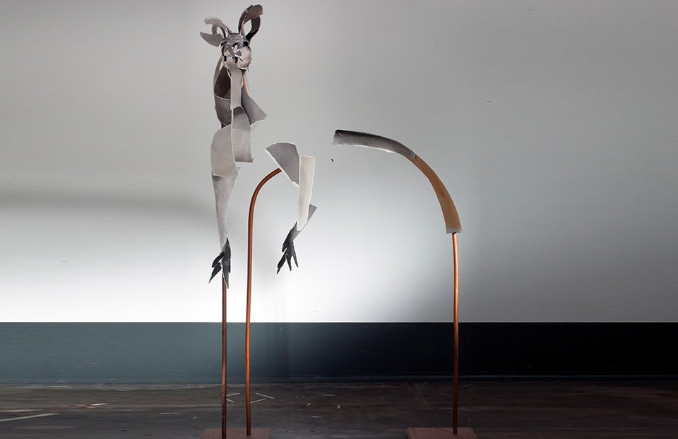 Kangaroo Anna-Wili Highfield