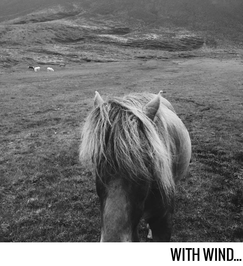with wind // Terra incognita @emily__johnston