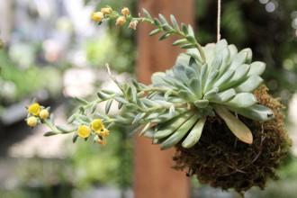 DIY-Garden-Hanging-Kokedama-Plant1