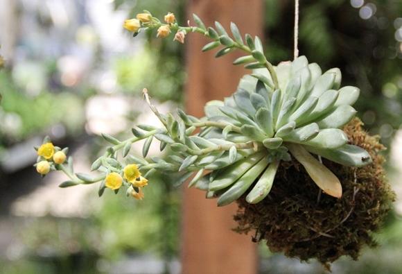 DIY Garden: Hanging Kokedama Plant // Free People