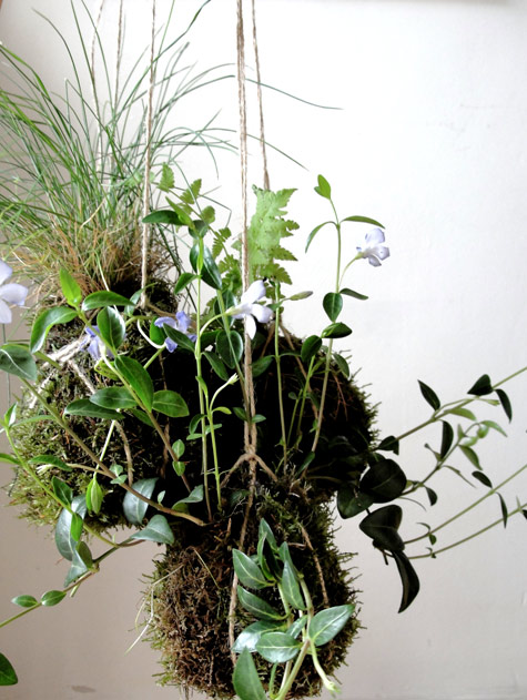 "DIY PROJECT: ""KOKEDAMA"" STRING GARDEN // Design Sponge"