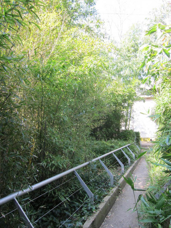 jardin-de-bambous-la-villette_BDEF