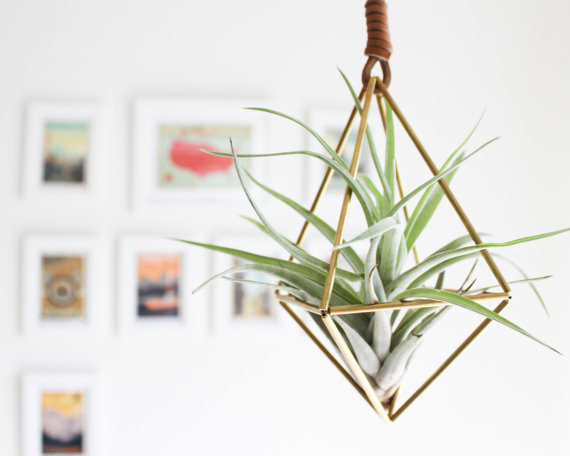 Himmeli-The Diamon-Brass-Air-Plant-Holder