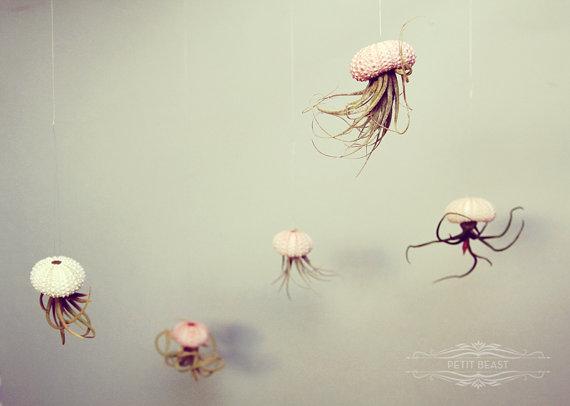 Jellyfish-Air-Plant