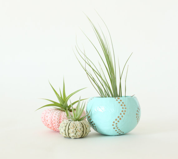 Teeny Tiny Air Plant Planter Trio