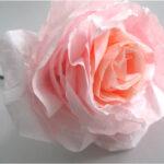 Les roses de CraftberryBush