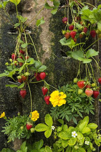 14sept_BD_sous_les_fraises_-_10