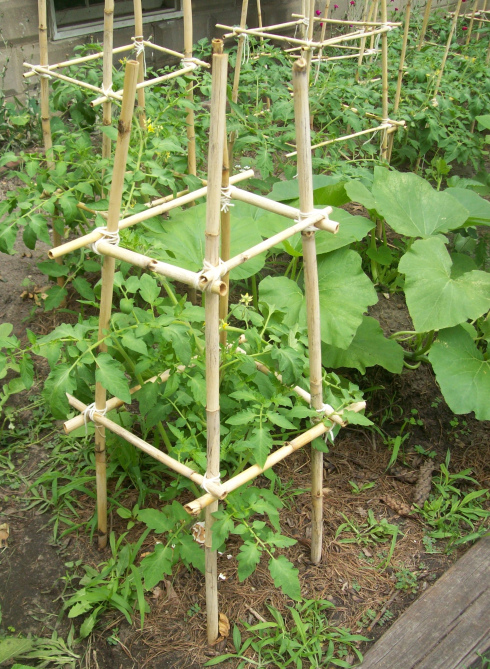 Homemade bamboo tomato cages (Cost: $0) // Inch by Inch, Row by Row