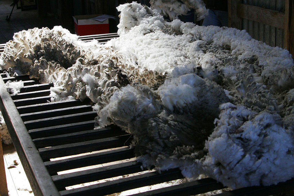 Wool_shorn_from_aust_merino_sheep