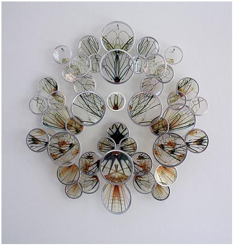 A-fluttering-of-pinned-wings-in-silver-frames-Alan-Bur-Johnson