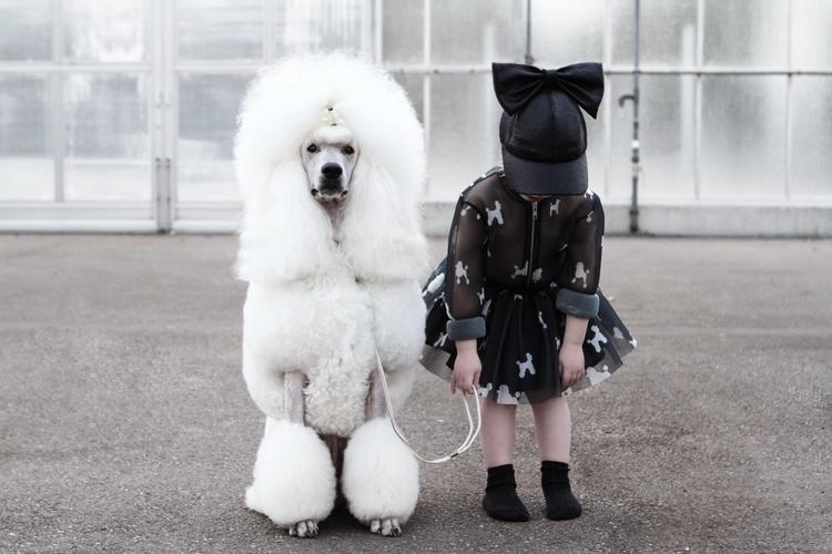 CRLNBSMNS-poodle