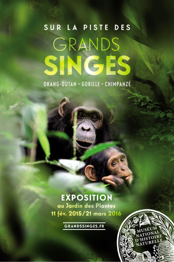 expo-grands-singes-mnhn