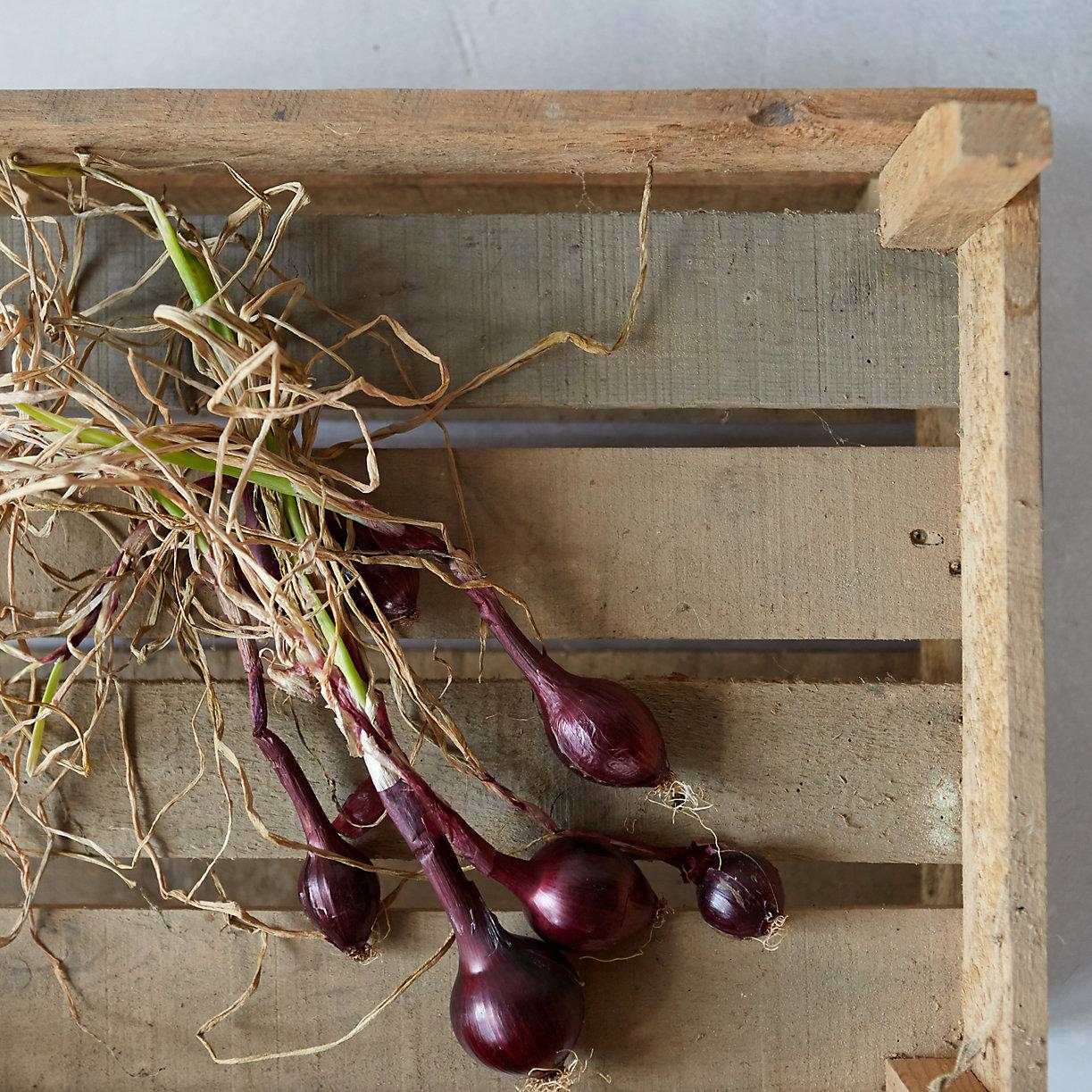 Forcer les bulbes - Comment planter des bulbes ...