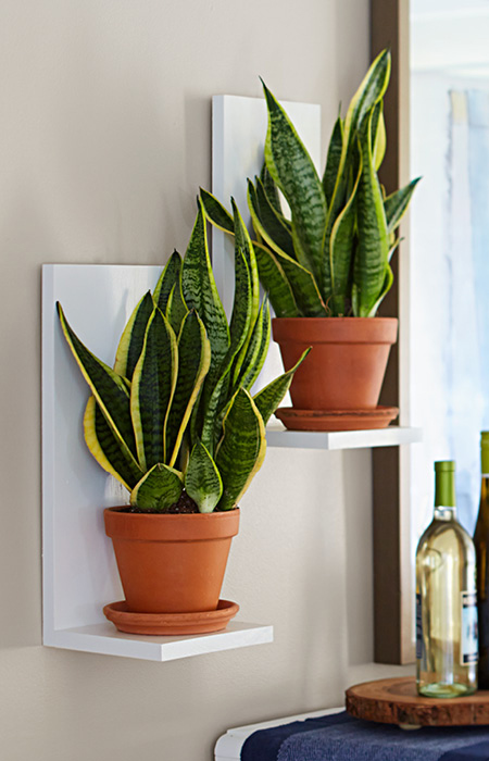 Wall-Mounted-Plant-Shelves-102326305-share
