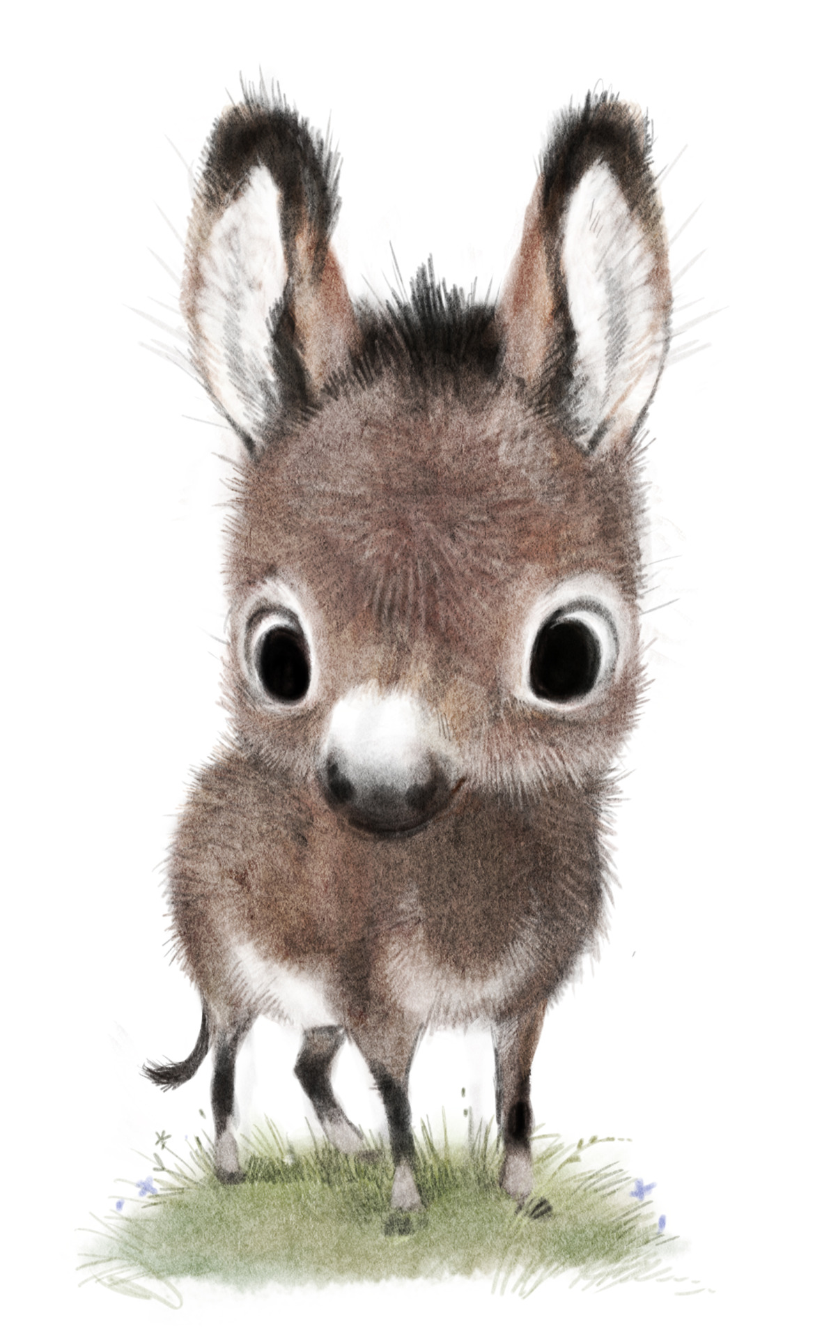 donkeys-syd-illustration