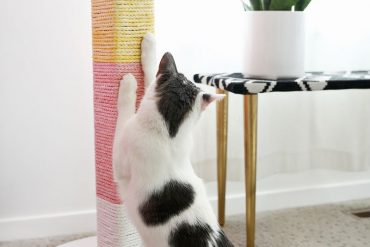 3 DIY pour le chat