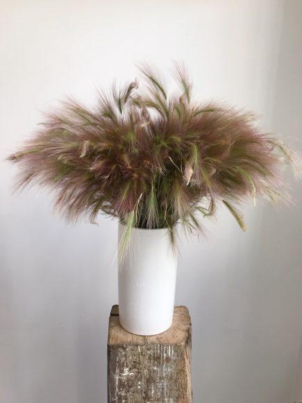 Epiphyte-dialogue floral-Castor Ffeuriste