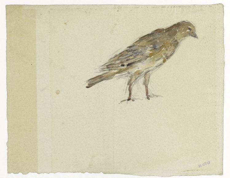 """Henry Cros (1840-1907). """"Feuille d'études : oiseaux"""". Crayon et aquarelle sur papier vergé. Musée des Beaux-Arts de la Ville de Paris, Petit Palais."""
